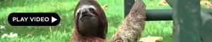 2010-11-05-sloths.jpg
