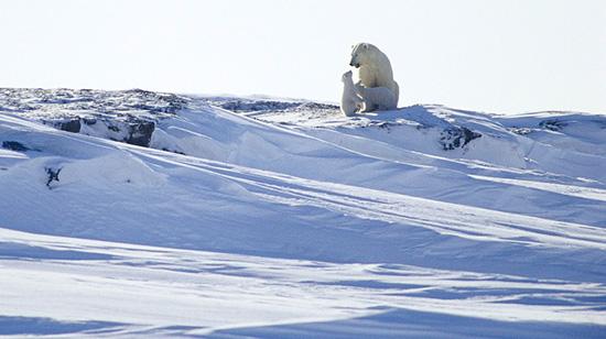 2010-11-15-polarbearandcubshp.jpg