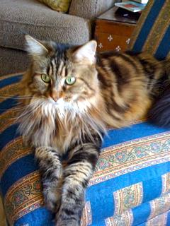 2010-11-23-cat1290394906.jpg