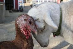 2010-11-24-turkey.jpg