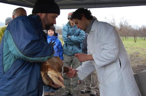 2010-11-28-SlaughterHuff.jpg