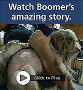 2010-12-01-Boomer_banner.jpg