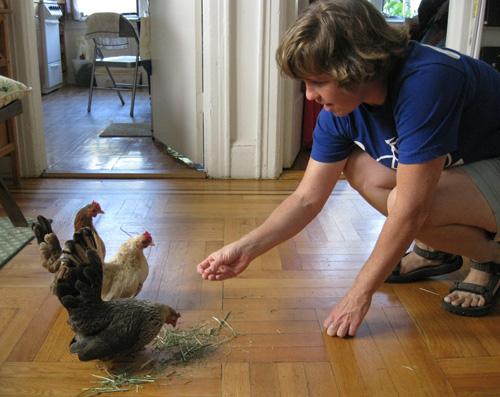 2010-12-02-Chicken27.jpg