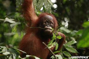 2010-12-02-orangutan.jpg