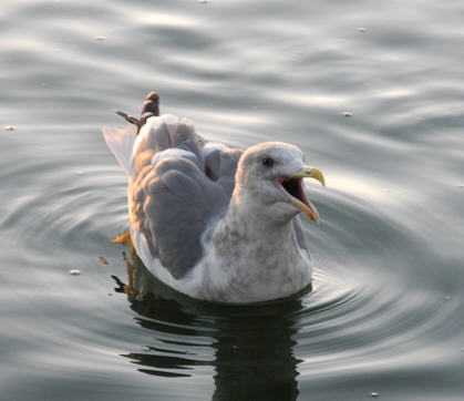 2010-12-03-bird.jpg