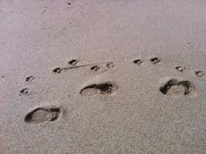 2010-12-04-footprints300x224.jpg