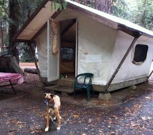 2010-12-04-tentcabin300x265.jpg & Big Sur California: Camping at Fernwood Resort | HuffPost