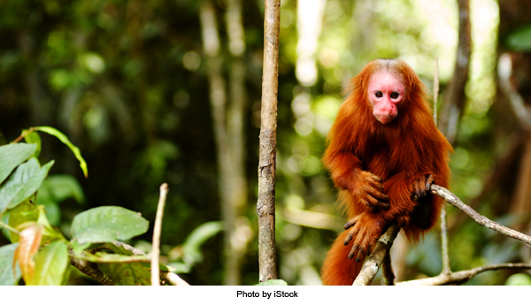 2010-12-13-monkey_r1.jpg