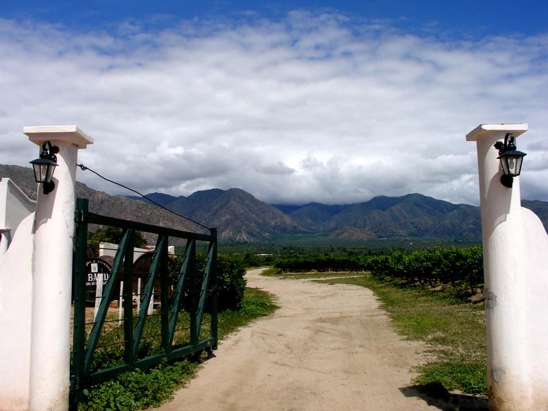 2010-12-14-argentinavineyard.jpg