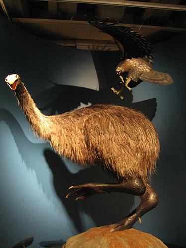 2010-12-16-EagleandMoa.jpg