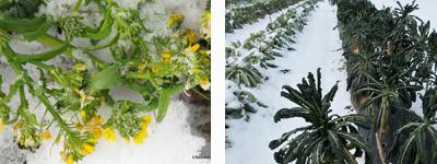 2010-12-20-row2.jpg