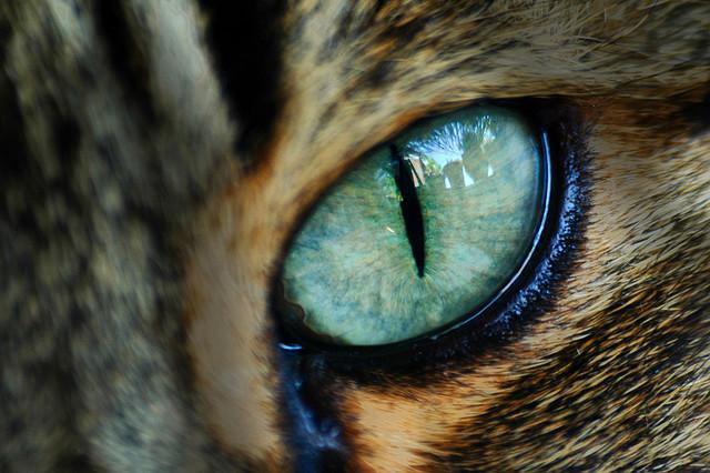 2010-12-22-CatEye.jpg