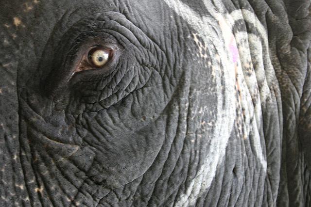 2010-12-22-ElephantEyeFlickr.jpg