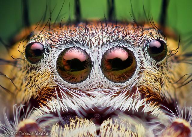 2010-12-22-SpiderEyes.jpg