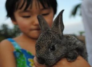 2011-01-10-bunnylove300220.jpg