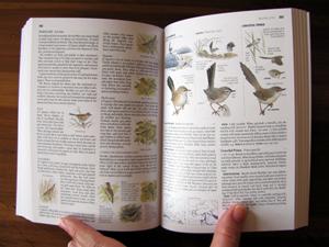 2011-01-12-Warblers.jpg