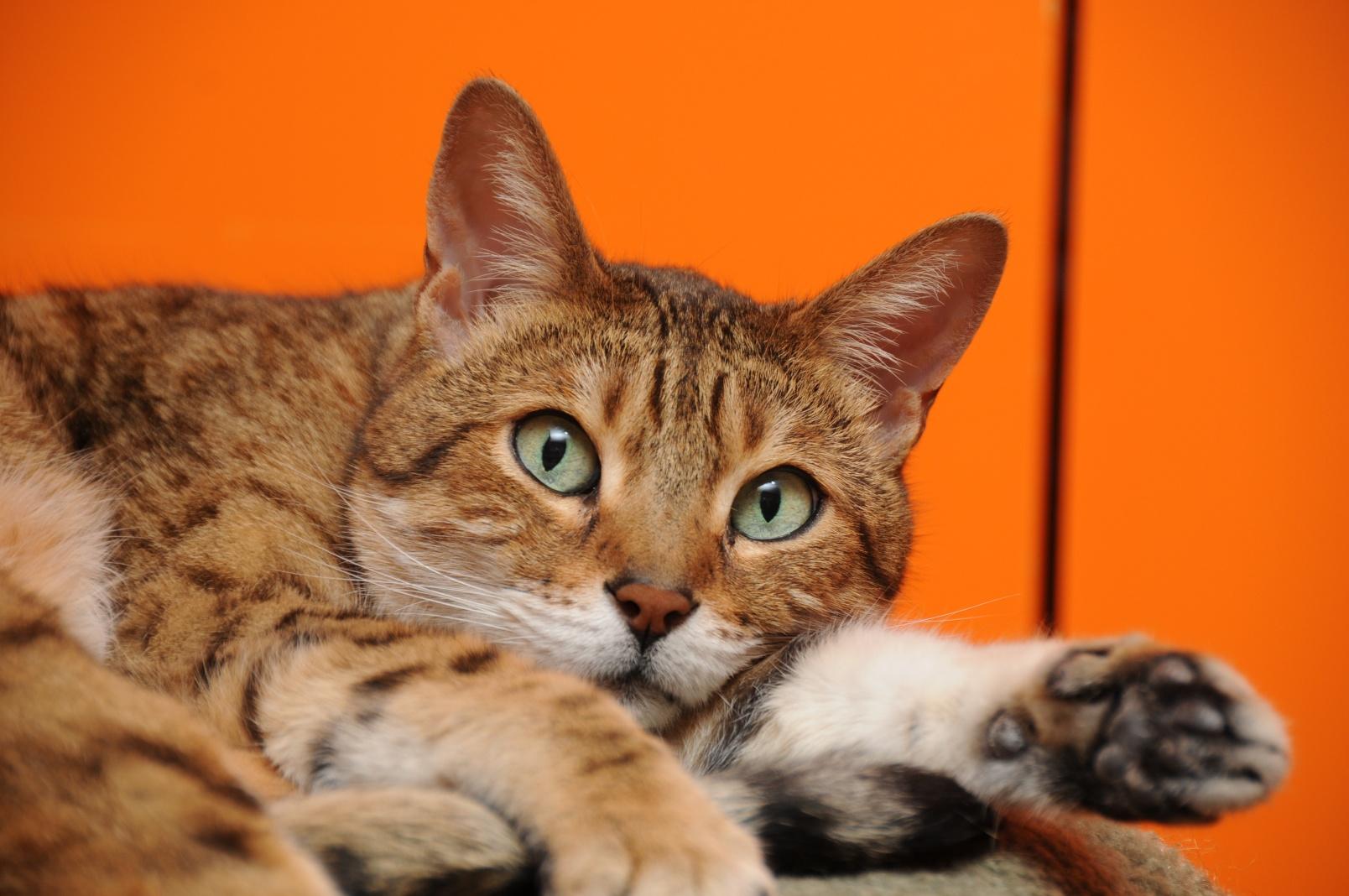 2011-01-15-CatsSprayThumb.jpg