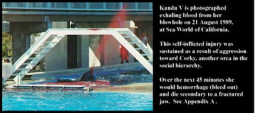 2011-01-20-Kandu5Caption.png