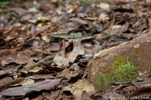 2011-02-01-ChameleonBrookesiaBurrardLucas2.jpg