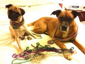 2011-02-01-mardigrasdogs300x224.jpg