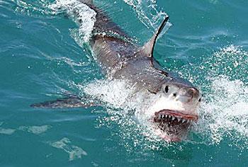 2011-02-02-shark3.jpg