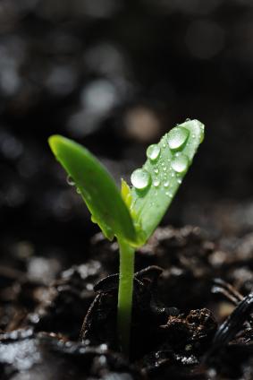 2011-02-03-seedling.jpg