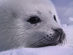 2011-02-04-sealpupss1.jpg