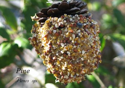 2011-02-08-pineconefeedero.jpg