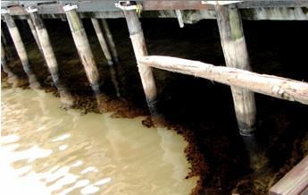 2011-02-09-oill.jpg