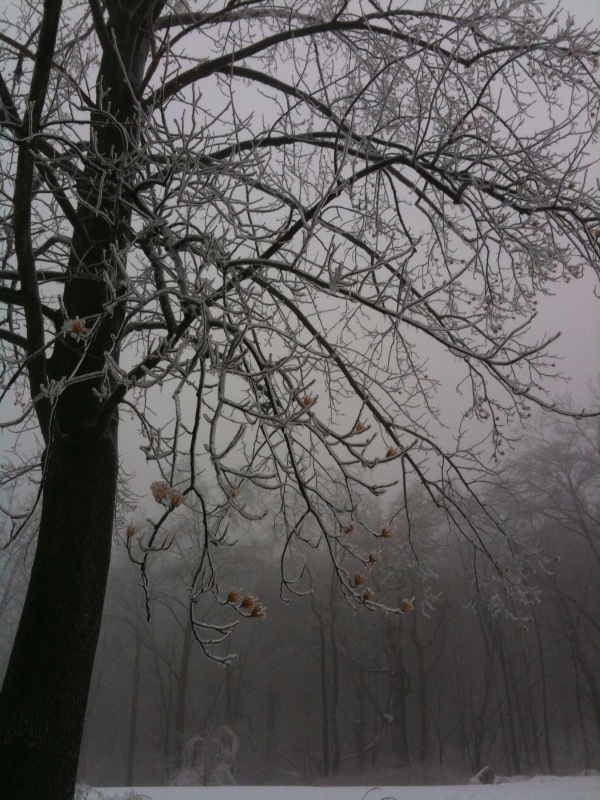 2011-02-14-ice.jpg