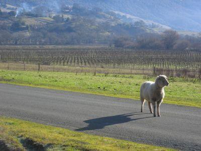 2011-02-17-sheep1.jpg