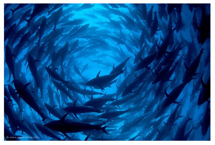 2011-02-18-bluefin.jpg