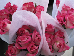2011-02-18-gflowers1.jpg
