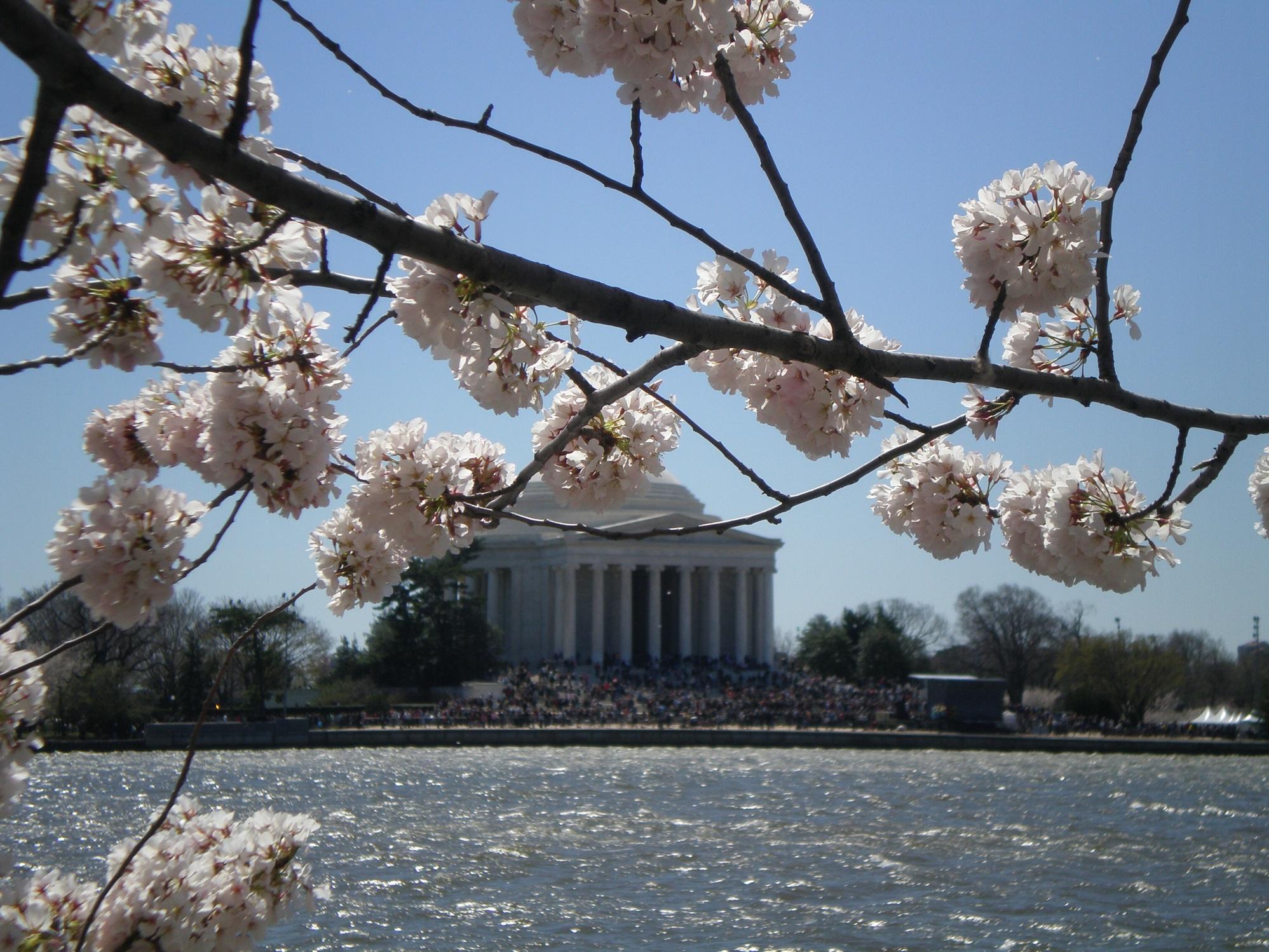 2011-03-09-CherryBlossoms2.jpg