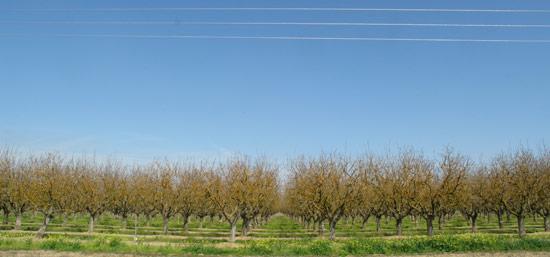 2011-03-10-agriculturalsymmetry.jpg
