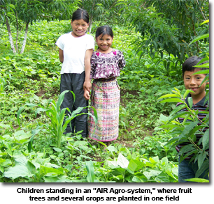 Photo of Children standing in an AIR Agro-system, where fruit trees and several crops are planted in one field