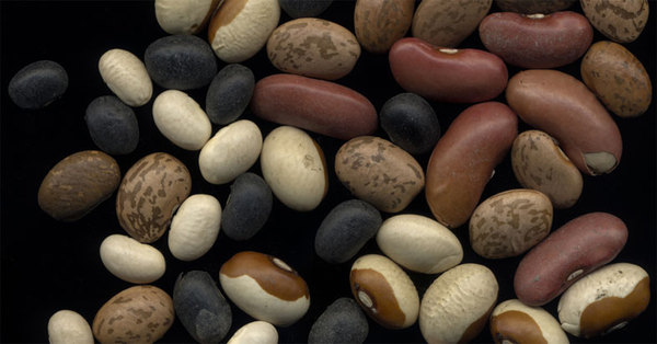 2011-03-16-beans_small.jpg
