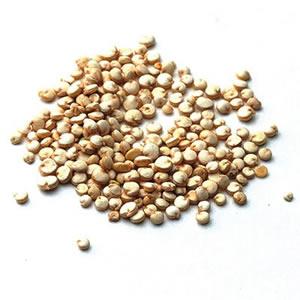 2011-03-18-quinoa.jpg