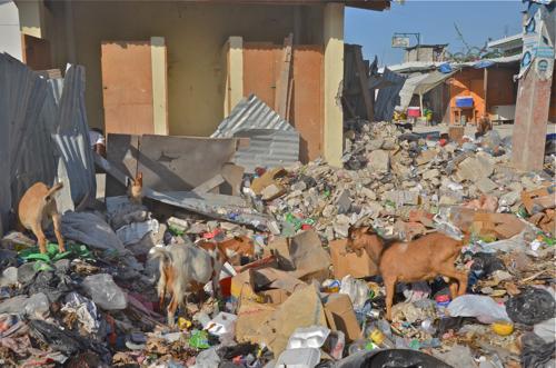 2011-03-21-story_goats.jpg