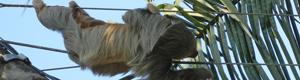 2011-03-22-slothonwire.jpg