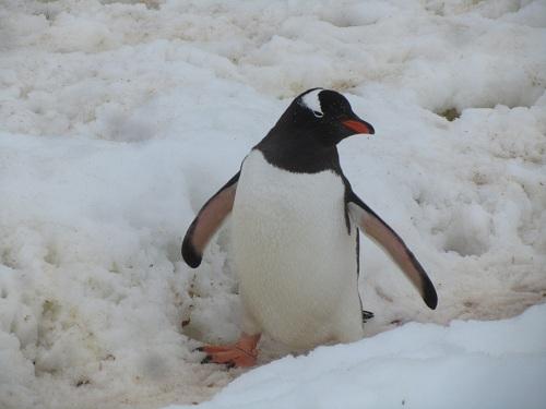 2011-03-24-penguin.jpg