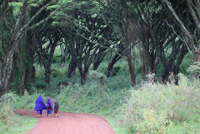 2011-03-29-MaasaiRoad_ChuckWolfe.jpg