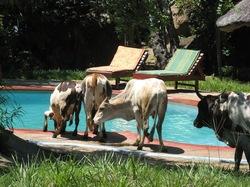 2011-04-05-D.wildlifebythepoolsmallcopy.JPG
