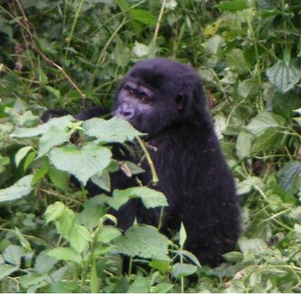 2011-04-10-gorillalittle.jpg