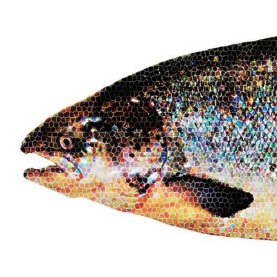 2011-04-15-salmon_head_400.jpg