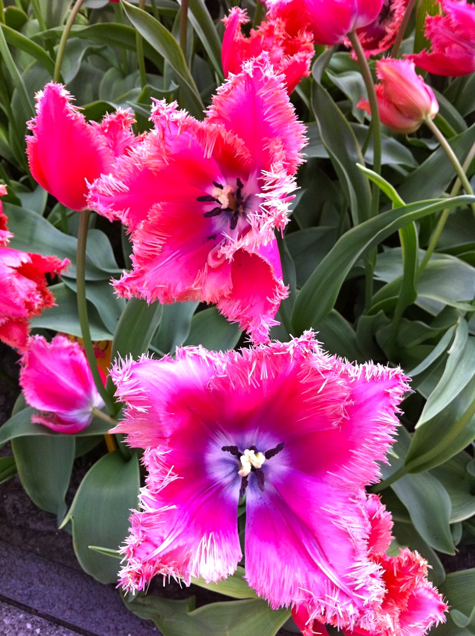 2011-04-22-photo39.jpg