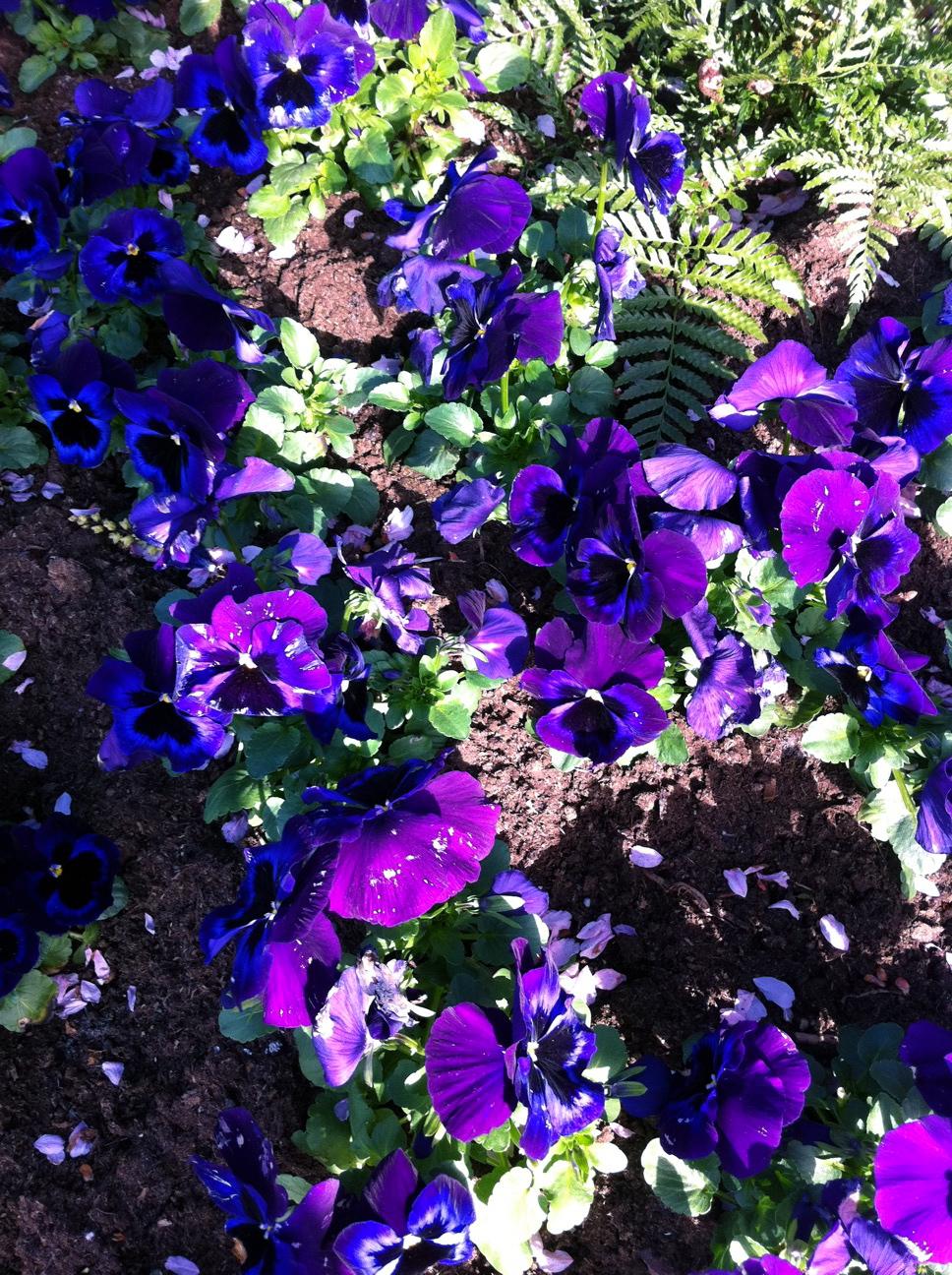 2011-04-22-photo41.jpg