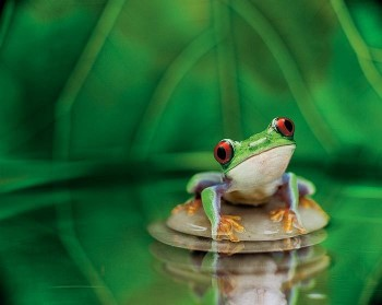2011-04-26-frog1.jpg