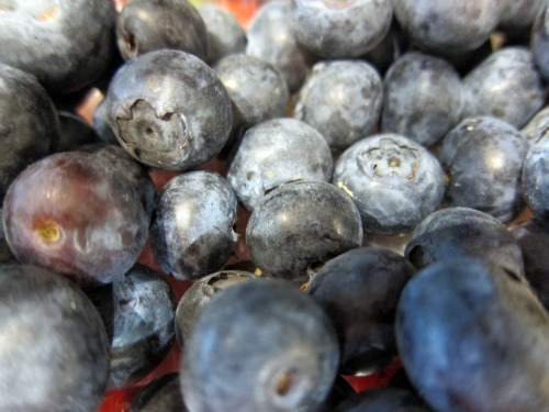 2011-05-08-SARETSKYBlueberries.jpg