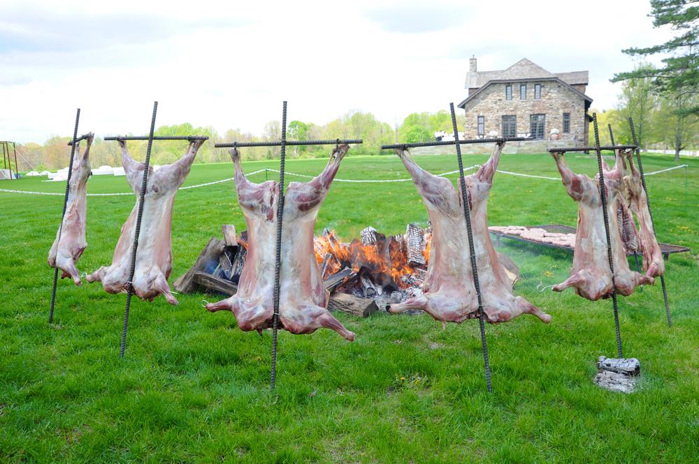 2011-05-11-pigs.jpg